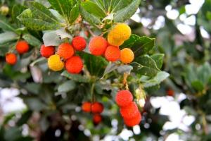 Winter berries, Southern Oregon. (Hadi Dadashian photo)