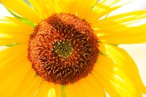 WA flower. (Hadi Dadashian photo)