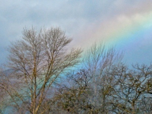 Southern Oregon rainbow. (Kathleen Kenna photo)