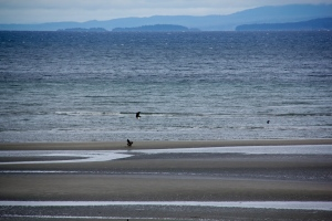 Parksville beach, B.C. (Hadi Dadashian photo)