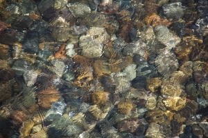 South Puget Sound water clarity. (Hadi Dadashian photo)